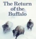 Cover image for The Return of the Buffalo (hardback) by Deirdre Cartmill
